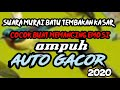 Suara Murai Batu Tembakan Kasar Murai Lain Auto Gacor  Mp3 - Mp4 Download