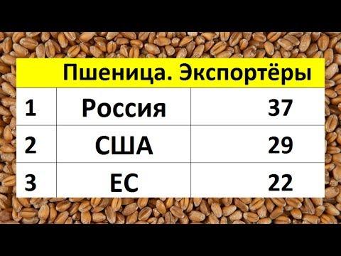 Россия №1 на рынке пшеницы
