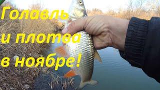 Рыбалка в ноябре на реке голавль и плотва