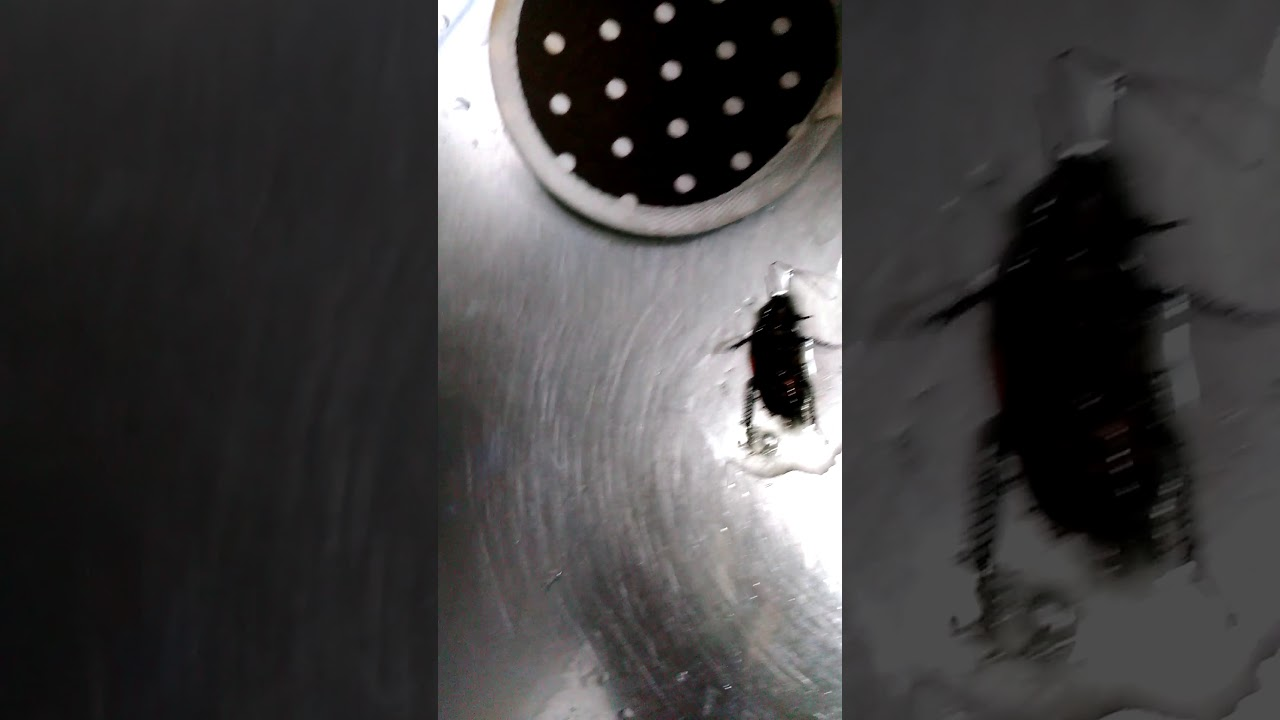 ゴキブリ 中 性 洗剤 ゴキブリに洗剤使ったらヤバすぎた!たった1つのコツで「即死」できる!