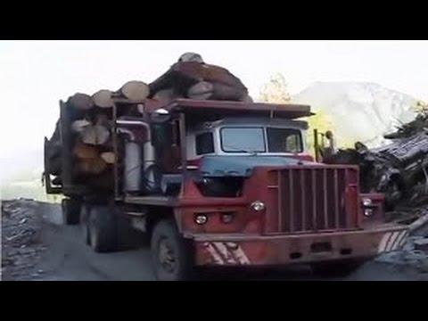 SECRET TRUCKS Transport Precious Wood Monster serious deforestation