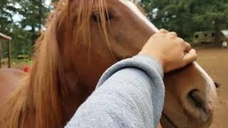 "ME Horsemanship Vlog 6/8/18-""Pistolita Hangs with the Big Girls!"""