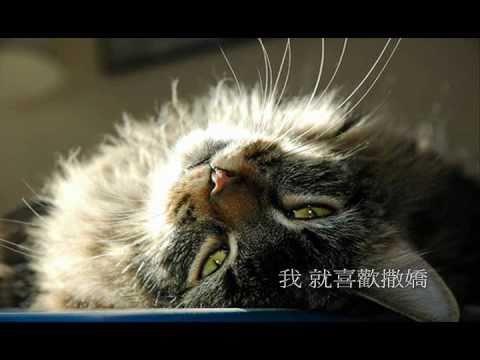 cat 好奇傻死貓