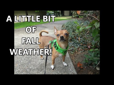 A Little Bit of Fall Weather 9.5.19 Day2262