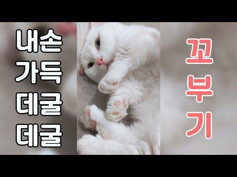 데굴데굴 고양이 (세로화면)