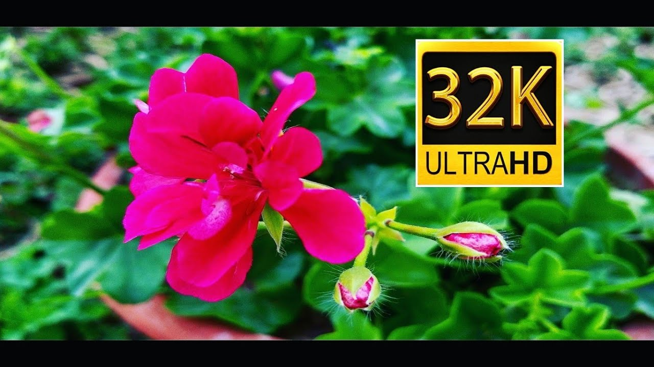 8k Ultra Hd 80 Fps And High Resolution Hdr Youtube