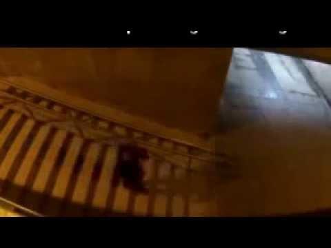 собака паук прикол видео