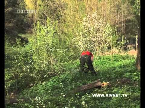 """Ровенская милиция ищет """"зеленых убийц"""""""