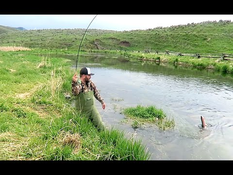 FLY FISHING FOR CUTTHROAT TROUT