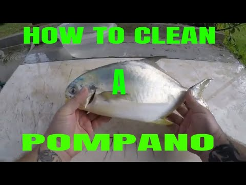 HOW TO CLEAN A POMPANO