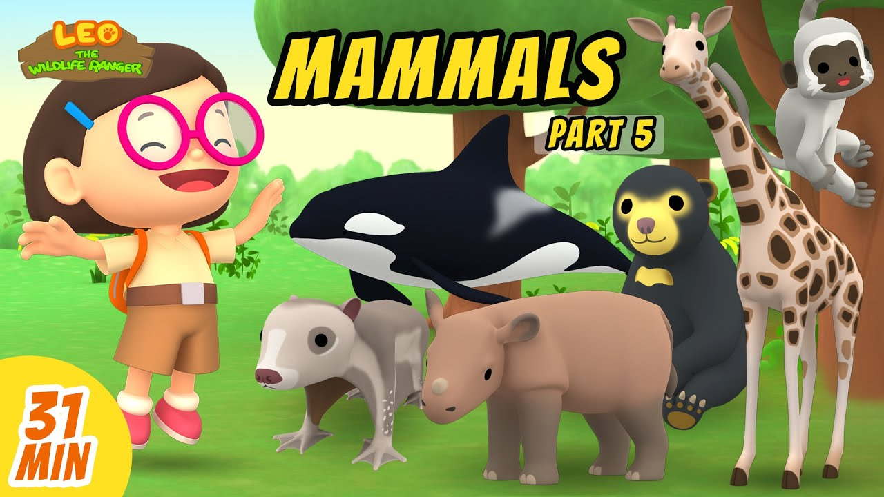 Mammals Minisode Compilation (Part 5/5) - Leo the Wildlife Ranger | Animation | For Kids