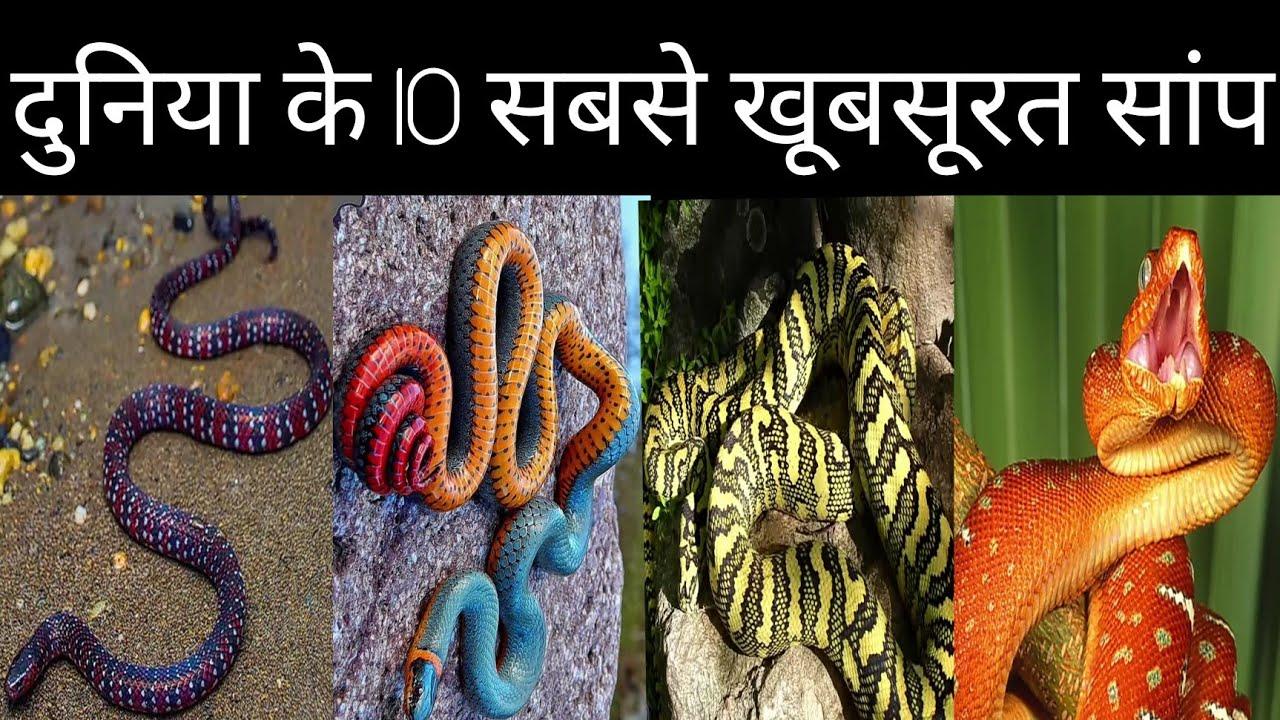 दुनिया के 10 सबसे खूबसूरत सांप _ 10 most beautiful snakes in the world