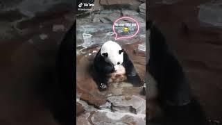 Feeling of panda