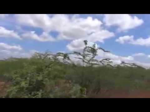CHINKARA WILDLIFE CENTURY