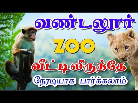 வண்டலூர் ZOO வீட்டில் இருந்தே நேரடியாக பார்க்கலாம் / vandalur zoo trip - Village Database