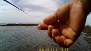 ◆2020.07.01 ◆ 【 牠說:沒在怕  來啊 來就來啊 】30到50公分大黑牛-水深3尺以下(淺)前打目印八卦輪-老洋 Fishing 教學影片裡有教找點看水色 若是還學不會 可以點倒讚喔
