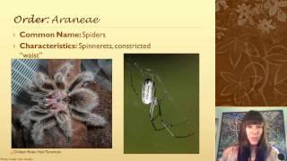 Identifying Arthropod Groups That Aren