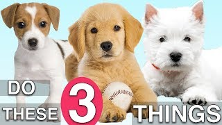 do-these-3-things-to-train-your-new-puppy-fast
