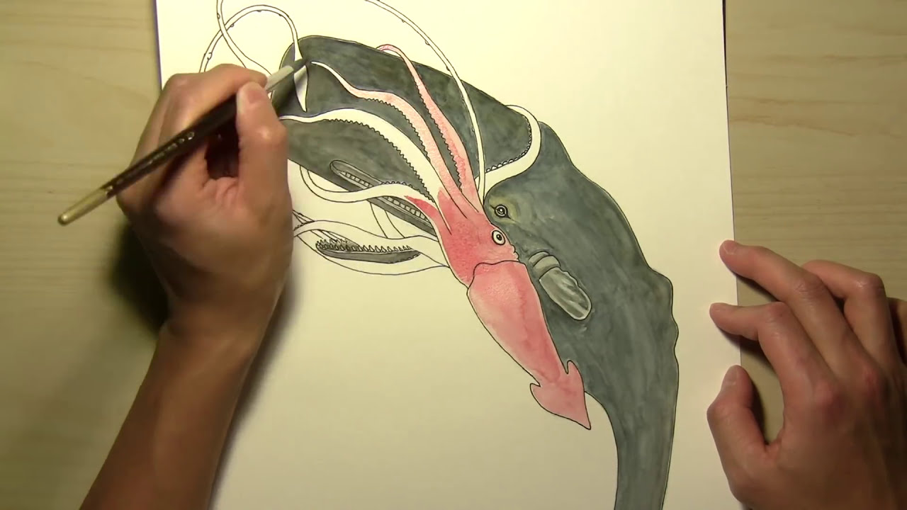 Uncategorized Squid Drawings how to draw a squid and whale youtube