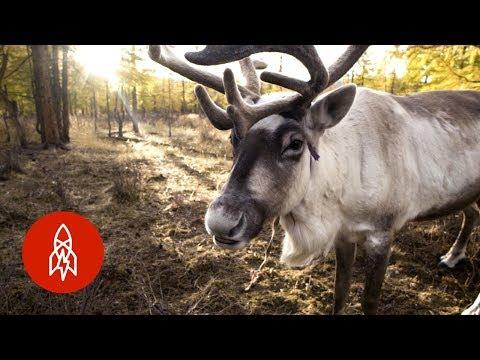 The Last Nomadic Reindeer Herders in the World