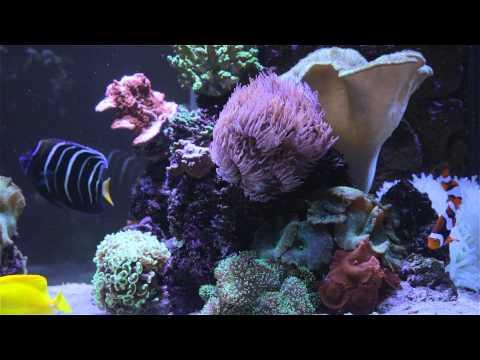 Finding Nemo Fish Tank Screensaver In Full HD Clownfish Aquarium