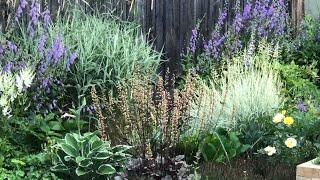 Мой сад в июле ~ Наша красивая природа ~ Малиновый сад
