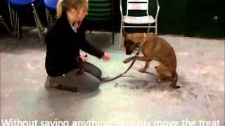 Tess - An Oakwood Rescue Dog In 'work Hard, Play Hard'.wmv