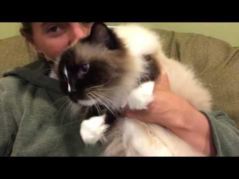 Cat Is a Kneading Maniac - Floppycats