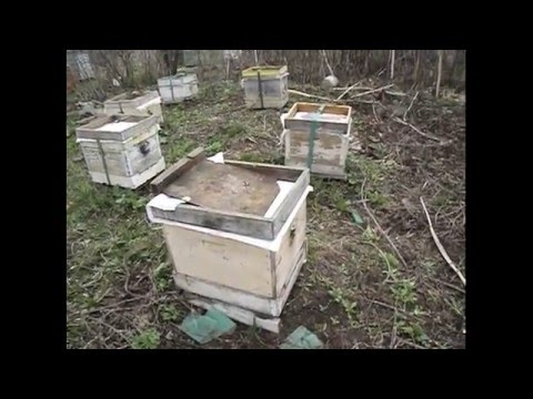 перевозка пчел на новое место