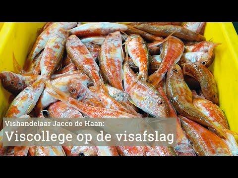 Rondgang over de Visafslag van IJmuiden