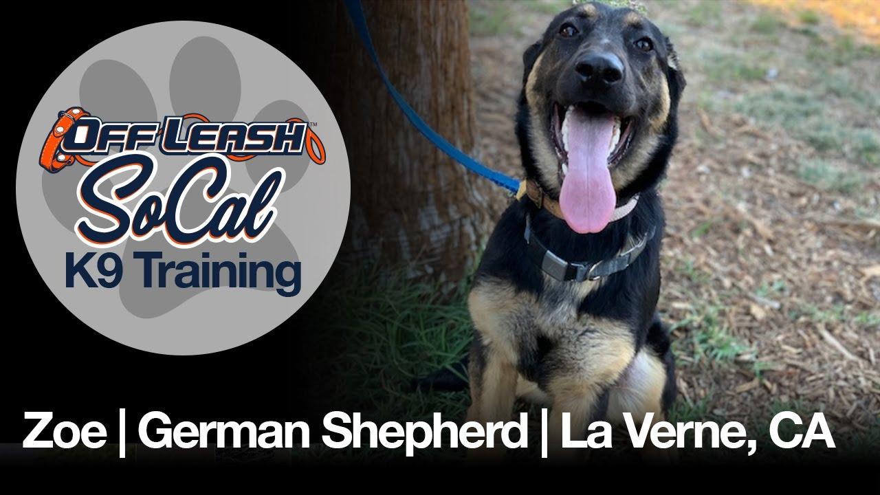 Zoe | German Shepherd | La Verne, CA