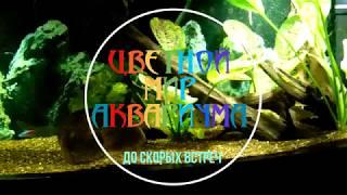 Гниение аквариумных растений и вспышка водрослей