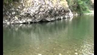 Les chubs des Gorges du Tarn à Sainte Enimie (Lozère)
