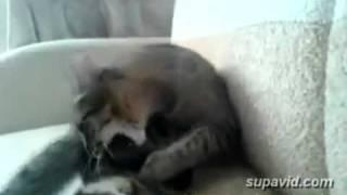 Spacy.Tv - Кот не дружит со своей ногой
