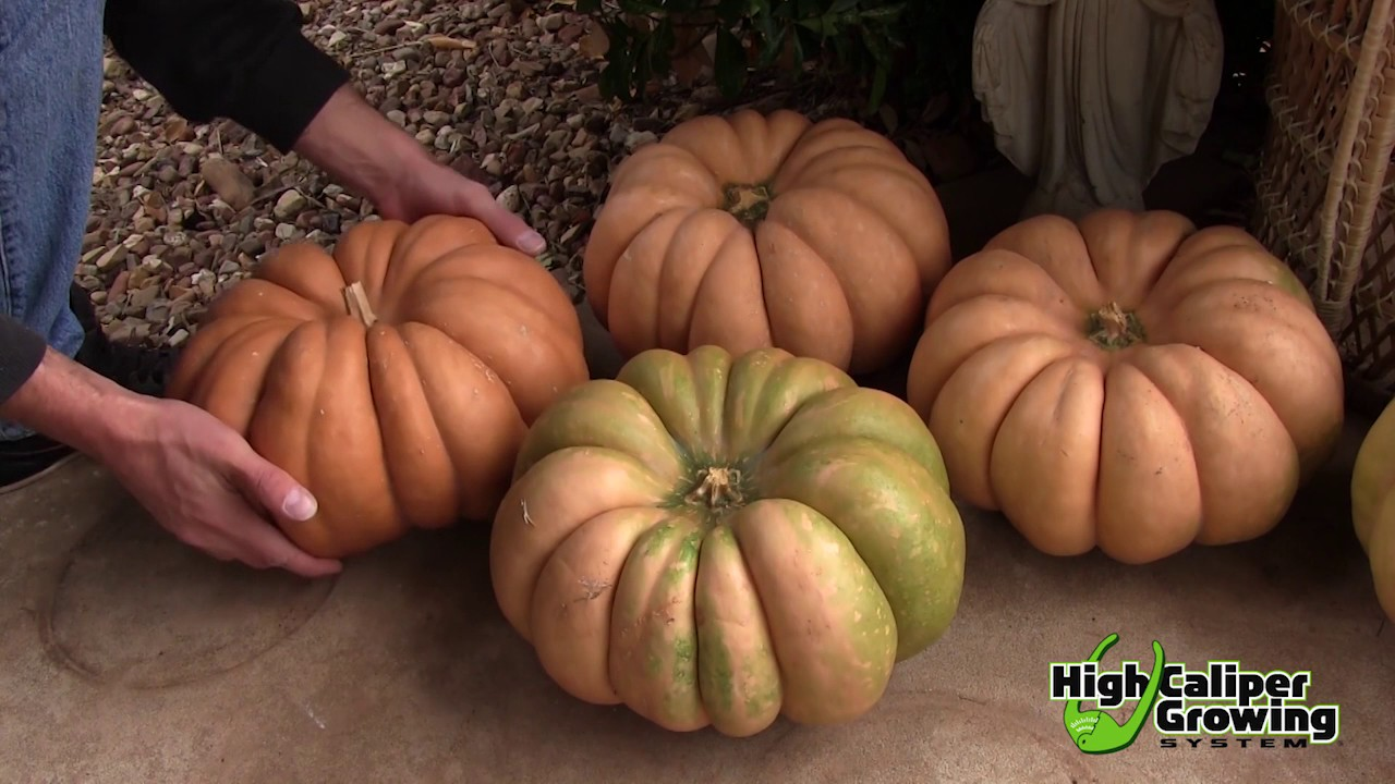 Growing Pumpkins In Smart Pots