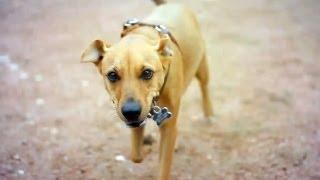 German Shepherd-pinscher Mix Burns Some Energy | The Daily Puppy