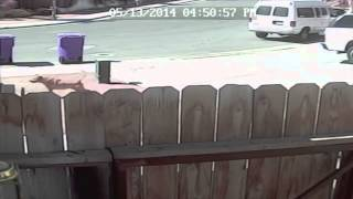 Cat Saves Young Boy From Dog Attack - Not Liveleak Bullcrap