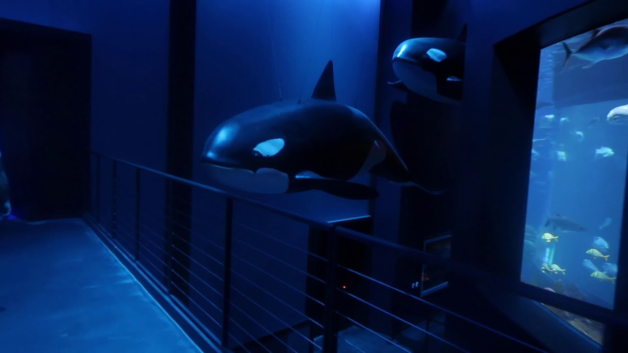Wonders of Wildlife Aquarium at Bass Pro - YouTube