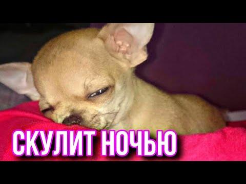 Как заставить щенка спать