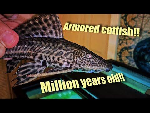 *MILLION* Year Old ARMORED Catfish!! & Tank Update!