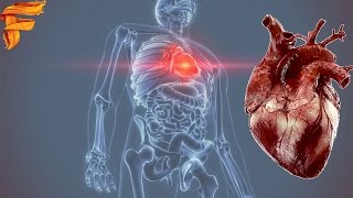 Top 7 Fascinating Facts About The Human Heart|| by Facts and  Mysteries||