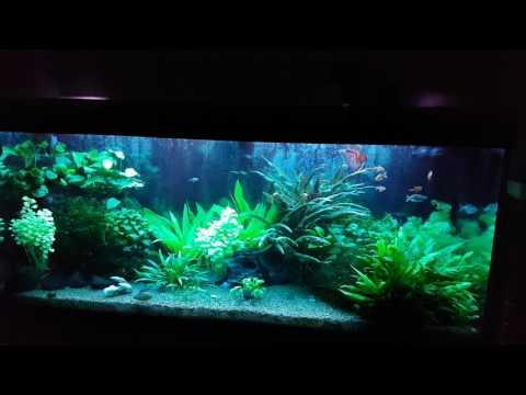 Treating Aquarium Using Methylene Blue