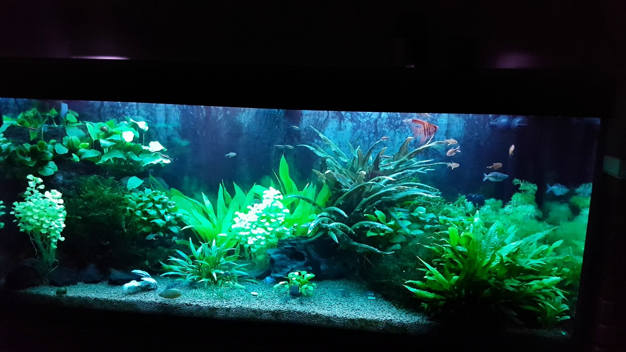 Treating aquarium using methylene blue youtube for Methylene blue fish