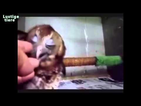 Nette und lustige Eulen und Owlets Compilation 2014