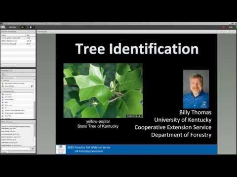 Tree ID Webinar Recording