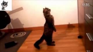 大搞笑猫狗视频集锦 高清