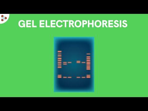 Play video: What is Gel Electrophoresis | Don't Memorise