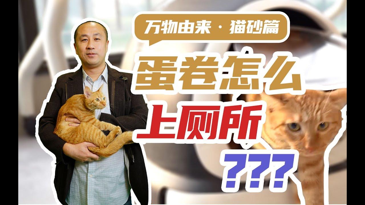 """万物由来·猫砂: 猫猫在现代城市重新""""落户口"""",还得感谢马克思"""