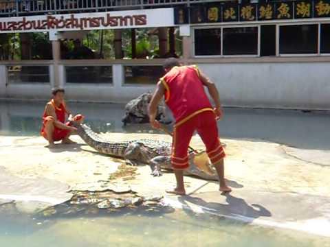 krokodiller i thailand