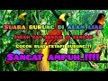 Terapi Suara Burung Alam Liar  Mp3 - Mp4 Download